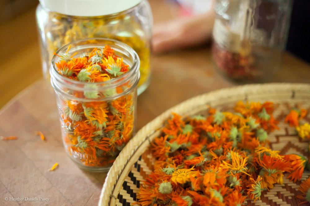 Herbs, Herbal Medicine, Herb Class, Herb Classes, Art Of Home Herbalism, Art Of Home Herbalism Online, The Art Of Home Herbalism, Calendula