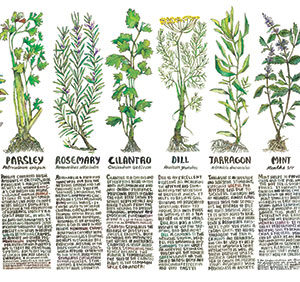 Herbal Cooking, Healing Herbal Kitchen, Healing Kitchen, Cooking With Herbs, Herbs, Herb Classes, Home Herbalism, Kitchen Poster, Herb Poster, Culinary Herbs, Herbal Medicine, Herbalism,