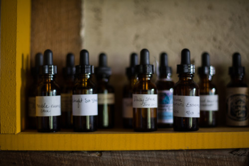 Thyme Herbal Classroom Tinctures