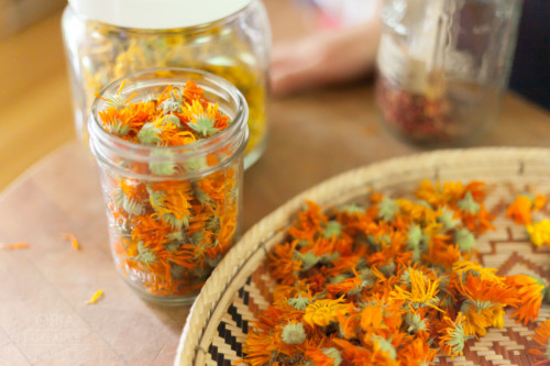 Calendula From The Art Of Home Herbalism Online