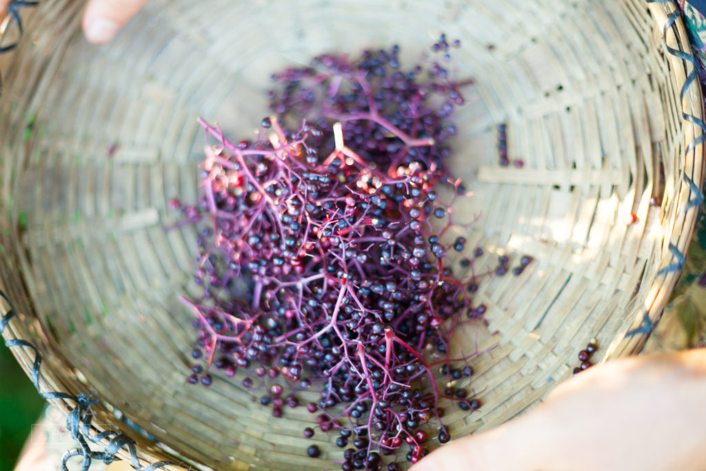 elderberries from the Art of Home Herbalism Online