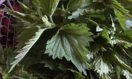 Basket Of Stinging Nettle